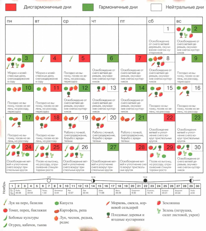 Лунный календарь посев огурцов